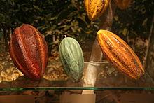 220px-Tres_variedades_de_cacao